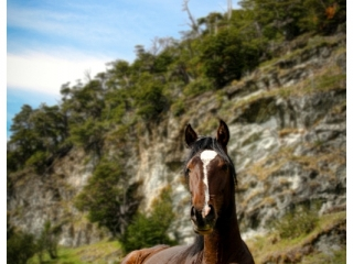 horse-usuhia