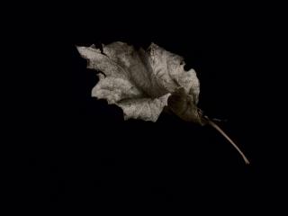 leaf-37-67240b0d4cd86d91a4cb0e69dae60794d5c11d5d