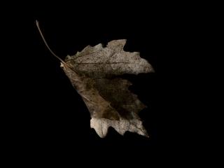 leaf-68-bf7dc8e0197e614a93ff6c8fb2a7b1723afadf8c